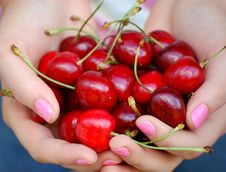 Free Hands Holding Cherries Royalty Free Stock Photography - 5444657