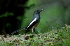 Free Pretty Bird Royalty Free Stock Photos - 5444788