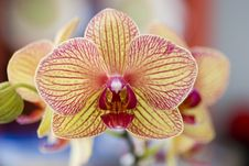 Free Yellow Orchid Stock Image - 5445021