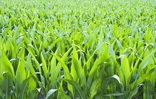 Free Green Field Stock Image - 5445391