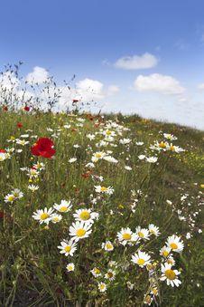 Free Wildflowers Stock Photography - 5445472