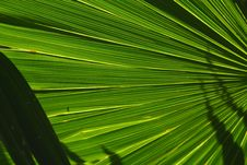 Free Palm Fan Stock Images - 5445514