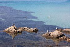 Free Seagull Stock Photos - 5445853