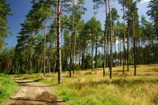 Free Trees In The Forest Stock Photo - 5446430