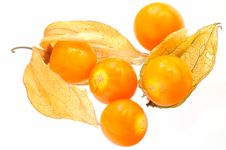 Free Physalis Royalty Free Stock Photo - 5446855