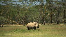 Free White Rhino Stock Photography - 5447062
