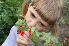 Free Eating Red Currant Stock Photography - 5448152