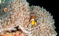 Free Dive Bali Stock Photo - 5452690