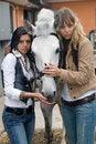 Free Women With White Horse Royalty Free Stock Photos - 5453238