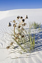 Free Lonely Plant  In White Dunes National Monument Stock Photography - 5455252