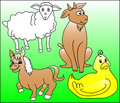 Free Farm Animals Royalty Free Stock Images - 5455409