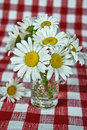 Free Wild Daisy Bouquet Royalty Free Stock Photos - 5459038