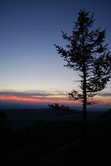 Free Sundown & Tree Royalty Free Stock Photo - 5450605