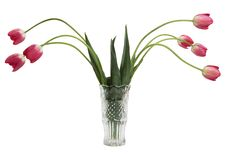 Free Red Tulips In Glass Vase Stock Photos - 5451733