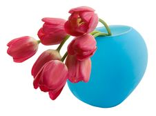 Free Red Tulip In Blue Vase Stock Photo - 5451750