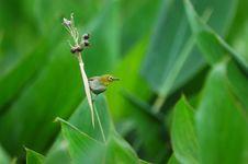 Free Bird And Mature Fruit Stock Photos - 5452073