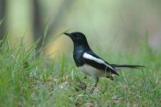 Free Pretty Bird Stock Photo - 5452160