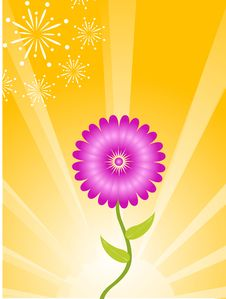 Free Flower On Rays Royalty Free Stock Image - 5452416