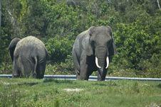 Free Elephant Stock Photos - 5452753