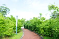Free Red Brick Path  In Bamboos Stock Photos - 5452863