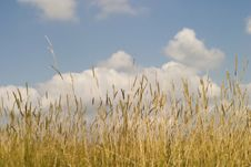 Free Green Grass And Blue Sky Royalty Free Stock Photo - 5453535