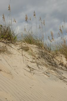 Sand Dune And Sea Oats Stock Images
