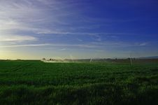 Sprinklers In The Morning Field Stock Photo