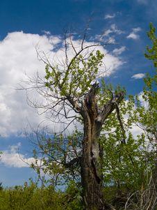 Free Broken Tree In Spring Stock Photo - 5456040
