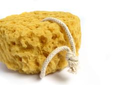 Free A Natural Wild Sponge Stock Photography - 5456612