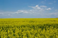 Free Rape Fields Stock Photo - 5458030