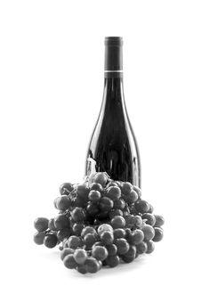 Free Monotone Wine Stock Photos - 5458743