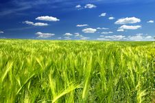 Free Green Field Stock Photos - 5458903
