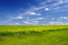 Free Green Field Stock Image - 5458971
