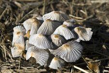 Free Fungi Stock Photo - 5459810