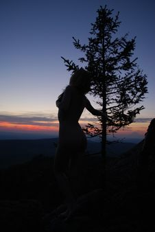 Sundown, Tree & Sexy Woman Royalty Free Stock Images