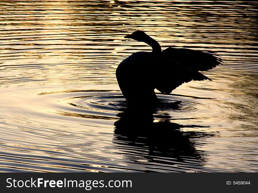 Spread-wings duck silhouette