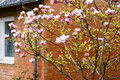 Free Blossoming Tree Stock Photo - 54502160