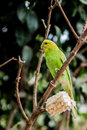 Free Bird Royalty Free Stock Photography - 54591367