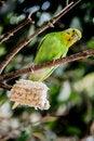 Free Bird Stock Photos - 54591453