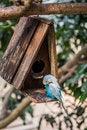 Free Bird Stock Images - 54591504