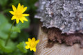 Free Wellow Flowers Stock Image - 5468401