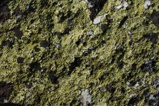 Free Moss On The Rock Royalty Free Stock Photography - 5460007
