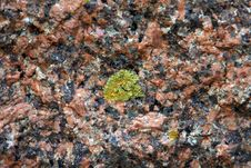 Free Lichen On A Rose Stone Stock Image - 5460671