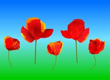 Free Red Poppies Royalty Free Stock Photography - 5460937