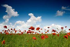 Free Poppy-field Stock Photo - 5461600