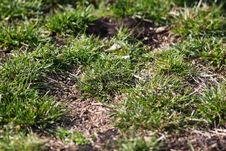 Free Stadium Grass. Stock Photography - 5461662
