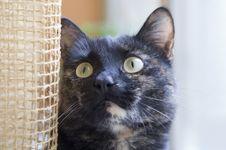 Free Cat Stock Photos - 5462413