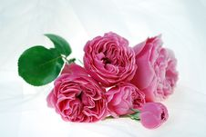 Free Pink Rose Bouquet Stock Photos - 5462453