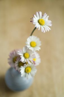 Free Daisies Stock Photo - 5462890