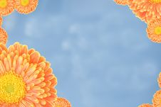 Free Summer Flower Frame Stock Photos - 5463933
